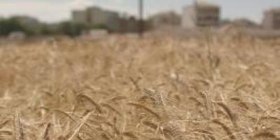 «Στάχυα απ' το χωράφι μας», ΦΣΚ 2017